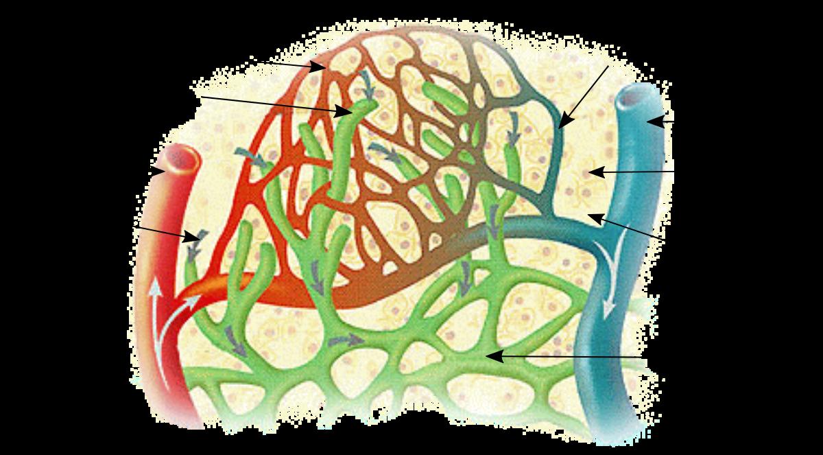 Drenaje Linfático Manual. Una técnica que influye sobre diferentes sistemas corporales